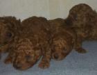 狗场直销各类世界名犬 健康质保 送货上门 可视频