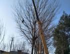 专业修树伐树移树