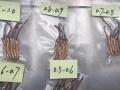 批发西藏新鲜虫草