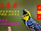 (鹏飞鸟业)经销各种观赏鸟 萌鸟 漂亮 可繁殖 价格低廉!!