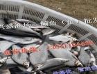 朔州市观赏鱼供应商、渔场直售
