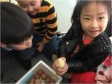 青島寄宿幼兒園市南區金太陽雙語幼兒園招生全托可寄宿