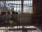 中小型犬猫兔子用尖顶可拆卸加粗铁笼