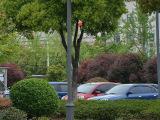 3米4米路灯庭院灯道路灯景观灯草坪灯户外灯室外灯工程照明灯具