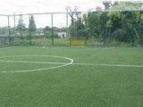 供应足球场草坪/足球场施工方案/足球场建