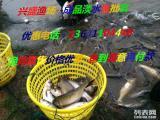 出售草鱼苗,鲤鱼苗,鲫鱼苗,青鱼苗,花鲢苗,白鲢苗