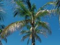 6月大连去普吉岛旅游_普吉岛6日亲子游_大连到普吉岛旅游