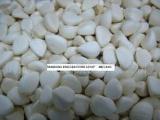 冷冻蒜丁 冷冻蒜泥 冷冻蒜米 蒜粒 蒜粉