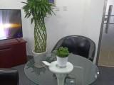 上海花卉绿植长短期租赁