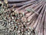 北市杉木杆绿化竹竿