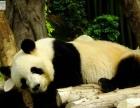 贵阳 修文双飞出行香港三天两晚海洋公园路线现在接受报名中仅要14