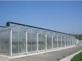 温室大棚建造厂家|河北育苗温室