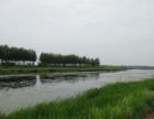龙江 50000平米 天然鱼池