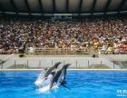 香港旅游团 两天一晚海洋公园 周末香港游 全包价仅260元