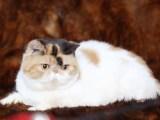 天津 波斯猫钱 里有卖