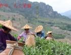 福建省安溪小志茶叶专业合作社批发市场