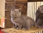 广州哪里有最正规最大的宠物店,我想养只蓝猫
