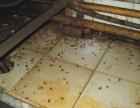 扬州益民专业消杀 一次消杀确保一年无蟑螂