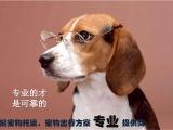 惠州惠城24小时宠物寄养宠物托运