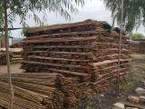 唐山丰南竹竿 杉木杆,开平杉木杆 竹竿