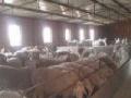 ( 出售)羊场!宣化区塔儿村乡前堡村