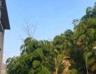 来长兴元旧岕农家乐,有猕猴桃采摘,赏十里银杏长廊