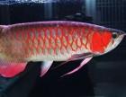 上海买观赏鱼的地方,上海卖热带鱼锦鲤鱼鱼缸