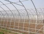 河北超农温室承接日光温室薄膜温室 温室大棚施工