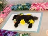 宠物去世服务 深圳宠物安葬