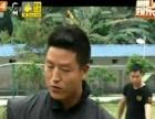 广州粤虎护卫犬训练学校欢迎来电咨询