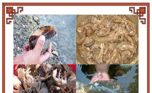 海岛休闲度假相约大连哈仙岛义财渔家