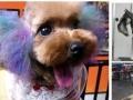山东乐秀宠物美容培训学校-全程真犬实操绝不用假狗