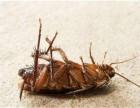 灭蟑螂除虫彻底 无反弹环保用药,对人体安全无害