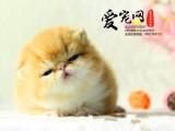 华东区最大加菲猫基地 上海爱宠网签协议 有保障