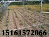 江苏盐城大丰大棚钢管,花卉大棚骨架现货长度3.5--12米配