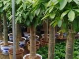 光明公明松岗沙井园区绿化,办公绿植花卉租赁