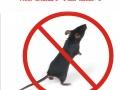 成都灭鼠老猫盒子公司快速安全消灭蟑螂的方法