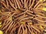 湖南長沙回收東阿阿膠回收魚肚的種類