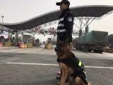 武汉训犬宠物训练专业训犬