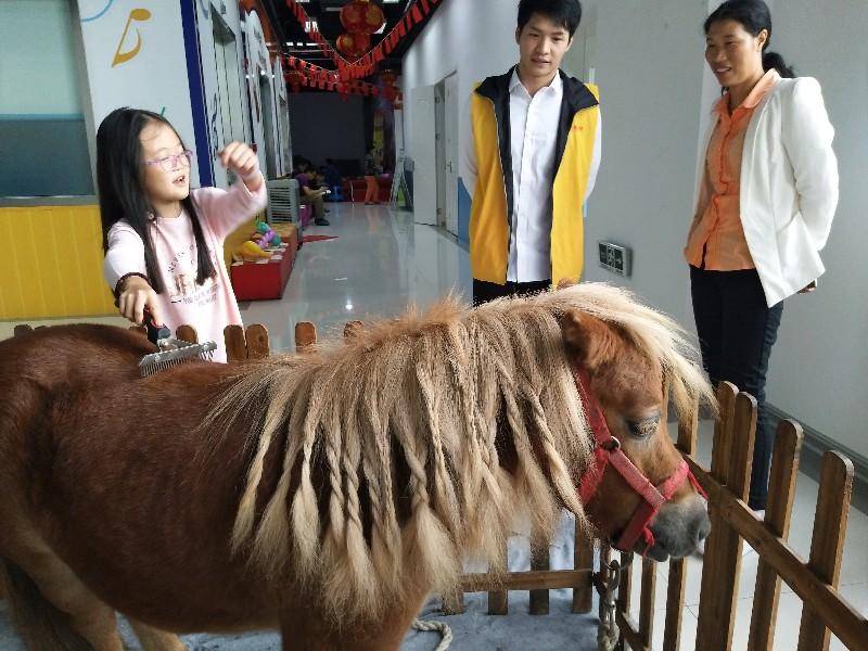 2018江苏羊驼出租矮马出租蓝孔雀出租展览庆典暖场