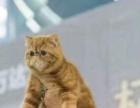 个人出售纯黑色加菲猫