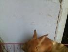 出售自己家兔场繁殖的宠物兔子