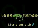 魔王,金花,黄山,红腹松鼠