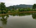 农村鱼塘,堰塘,池塘转让出租