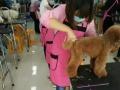 临沂宠物美容培训班,山东爱尔宠物美容师培训学校