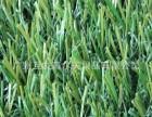 厂家批发直销休闲草 塑料草 人工草坪 三色草 长草