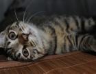 花狸猫一生日