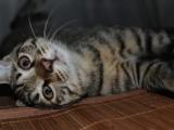 花貍貓一生日