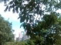 新出宝星园 开间式高配大主卧装修好 右边是绿地左边是soho