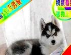 哈士奇幼犬——送狗用品——24小时营业——可刷卡